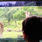 Taman Safari Prigen 2021